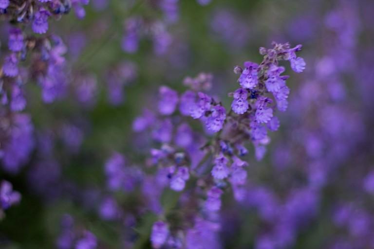 Garden2012_239 copy