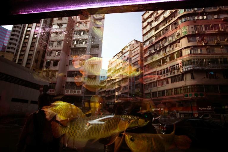 Goldfish Market