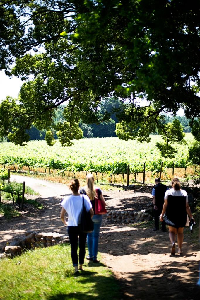 Wine Farm Tour