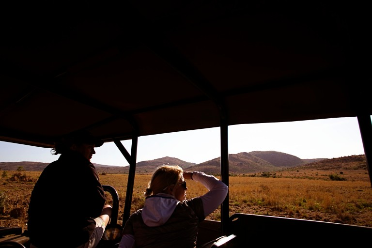 Safari: Looking for Lions